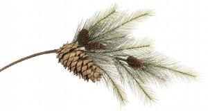 pine-spray