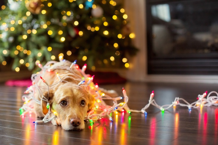 dog_christmas_lights