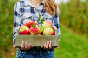 Apple picking fall activities family