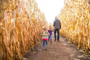 Two Girls & Dad Walking Through Autumn Corn Maze
